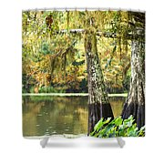 Cypress And Moss Shower Curtain