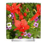 Cypress And Sweet Alyssum Shower Curtain
