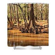 Cypress Arch Shower Curtain