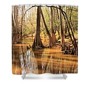 Cypress In The Swamp Shower Curtain