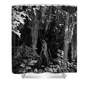 Cypress Knee Shower Curtain