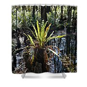 Cypress Knees And Ferns Shower Curtain