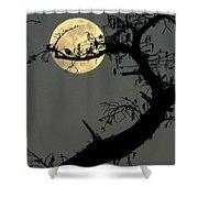 Cypress Moon Shower Curtain by Joe Jake Pratt