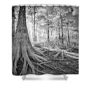 Cypress Roots In Big Cypress Shower Curtain