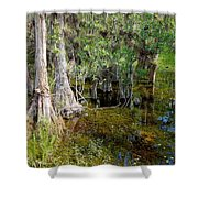 Cypress Trees 4021 Shower Curtain