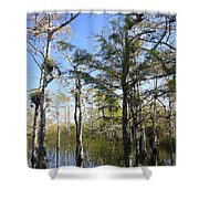 Cypress Swamp Shower Curtain by Rudy Umans