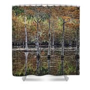 Cypress Tree Fall Reflections Shower Curtain