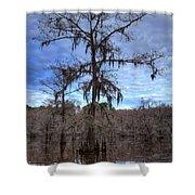 Cypress Tree Shower Curtain