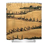 Cypress Tree Lined Road Shower Curtain