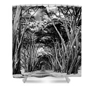 Cypress Tree Tunnel Point Reyes Shower Curtain