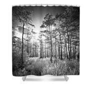 Cypress Trees In Big Cypress Shower Curtain