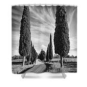 Cypress Trees - Tuscany Shower Curtain