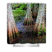 Cypress Waltz Shower Curtain by Karen Wiles