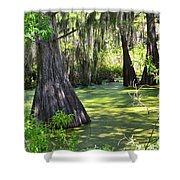 Cyprus Trees Shower Curtain