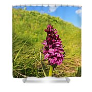 Dactylorhiza Orchid Shower Curtain