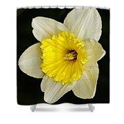 Daffodil 2014 Shower Curtain
