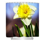 Daffodil Blossom Shower Curtain