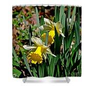 Daffodil Buddies Shower Curtain