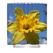 Daffodil Days  Shower Curtain