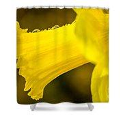 Daffodil Dewdrops Shower Curtain