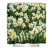 Daffodil Field 2 Shower Curtain
