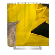 Daffodil Flower Shower Curtain