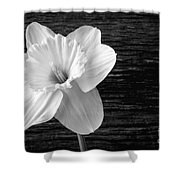 Daffodil Narcissus Flower Black And White Shower Curtain
