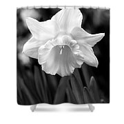Daffodil Flower Black And White Shower Curtain
