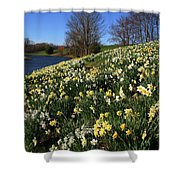 Daffodil Hill Shower Curtain
