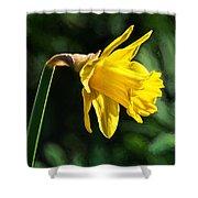 Daffodil - Impressions Shower Curtain