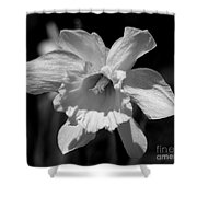 Daffodil In Black And White Shower Curtain