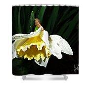 Daffodil In The Rain 2 Shower Curtain
