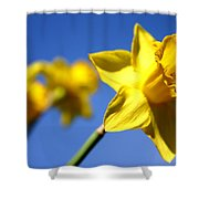 Daffodil Line Shower Curtain