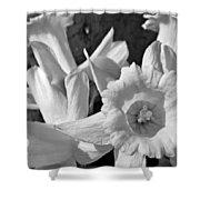 Daffodil Monochrome Study Shower Curtain