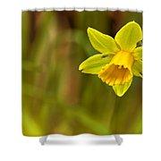 Daffodil - No. 1 Shower Curtain