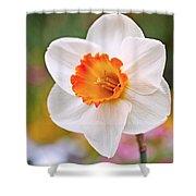 Daffodil  Shower Curtain by Rona Black