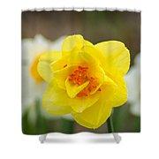 Daffodil Standout Shower Curtain