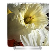 Daffodil Still Life Shower Curtain