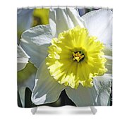 Daffodil Sunshine Shower Curtain