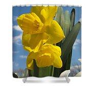 Daffodills In Spring Shower Curtain