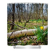 Daffodils And Birch Shower Curtain