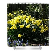 Daffodils And Bluebells Shower Curtain