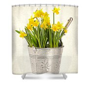 Daffodils Shower Curtain by Amanda Elwell