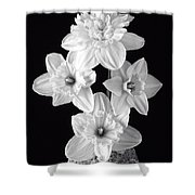 Daffodils Shower Curtain by Edward Fielding