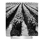 Daffodils Forever Shower Curtain