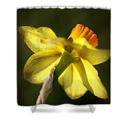 Daffodils Grace Shower Curtain