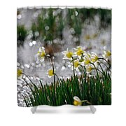 Daffodils On The Shore Shower Curtain