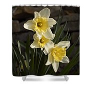 Daffs Shower Curtain