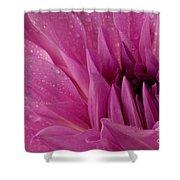 Dahalia In The Rain - 651 Shower Curtain