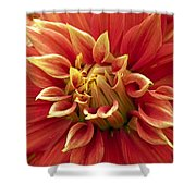 Dahlia - 2 Shower Curtain